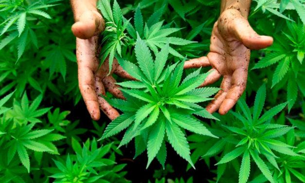Лечение зависимости от конопли, марихуаны, травки