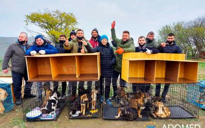 ✅ Волонтеры «ADOMED» приняли участие в акции помощи приюту для бездомных собак